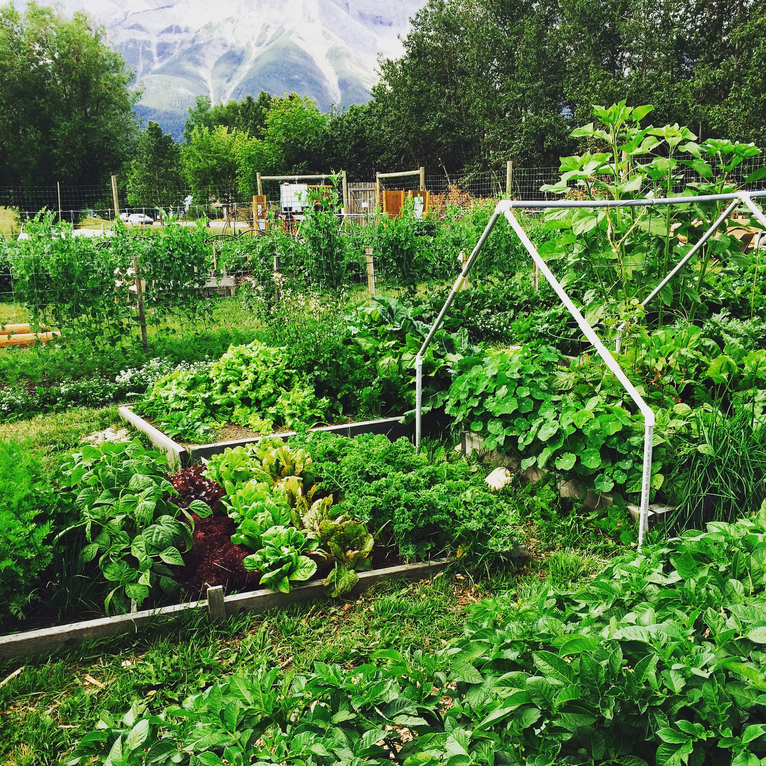 Canmore Community Gardening Society Growing Food Building