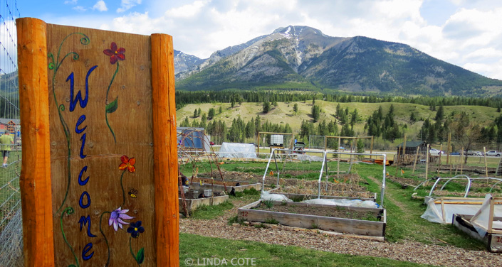 Canmore Community Garden 2013