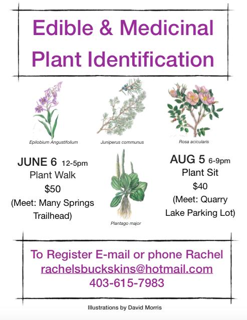 plant walk poster blog 2015